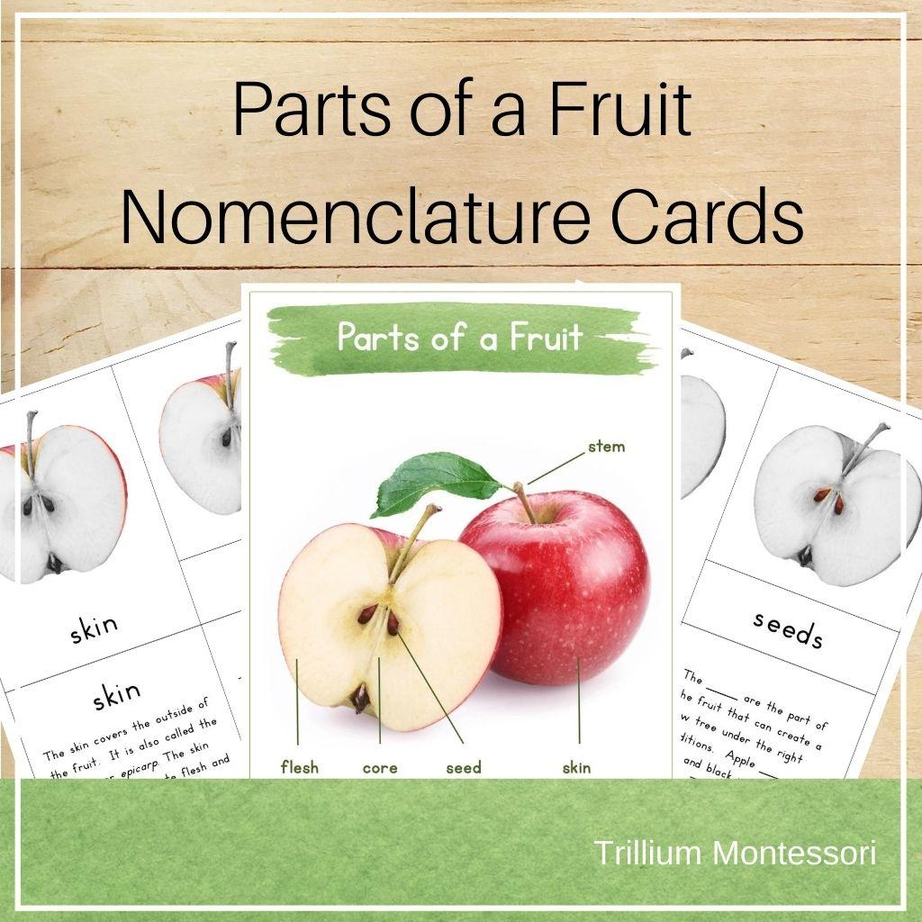 Botany Parts of a Fruit