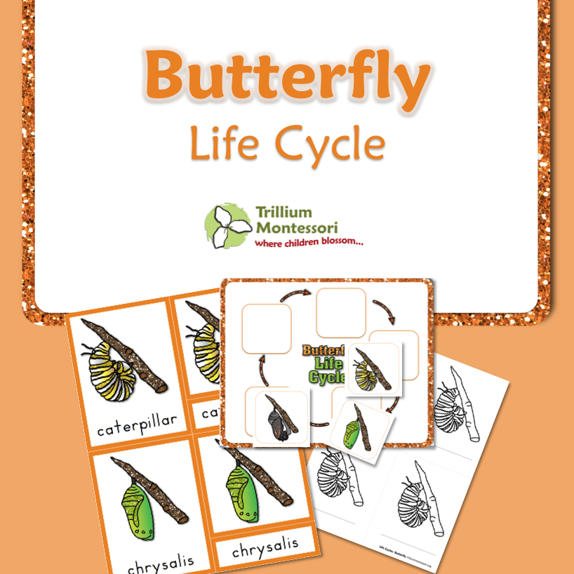 life-cycle-of-a-butterfly